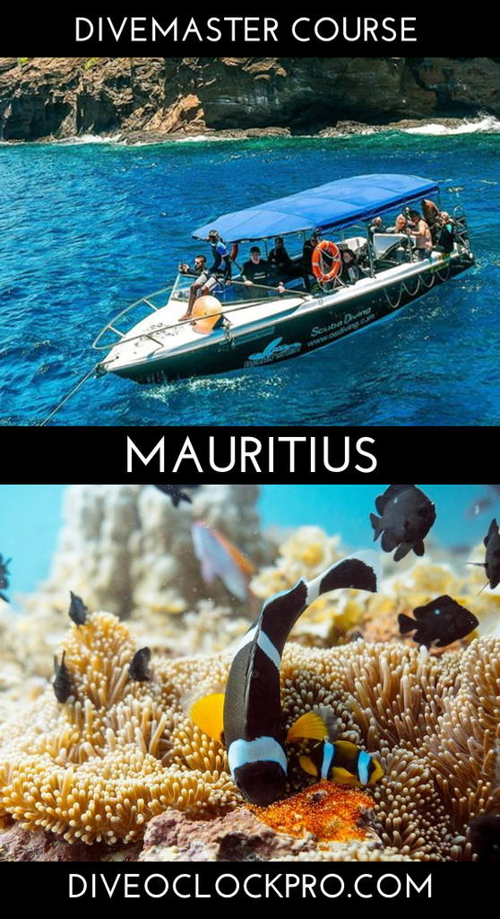 PADI Divemaster Course - Package with Self-catering Apartment - Pereybere, Grand Bay - Mauritius