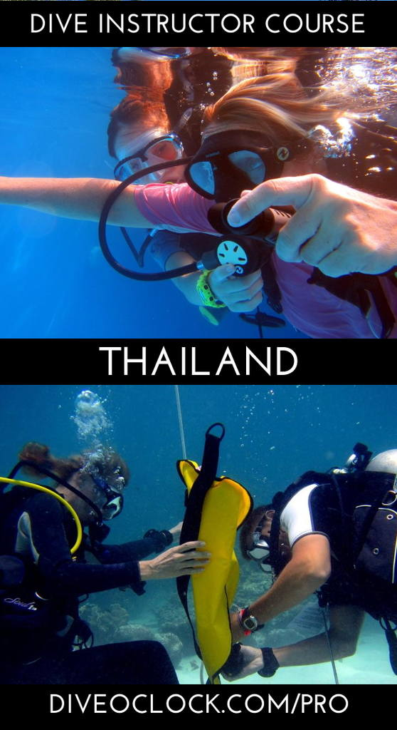 PADI Instructor Course IDC and MSDT Prep internship - Koh Samui - Thailand
