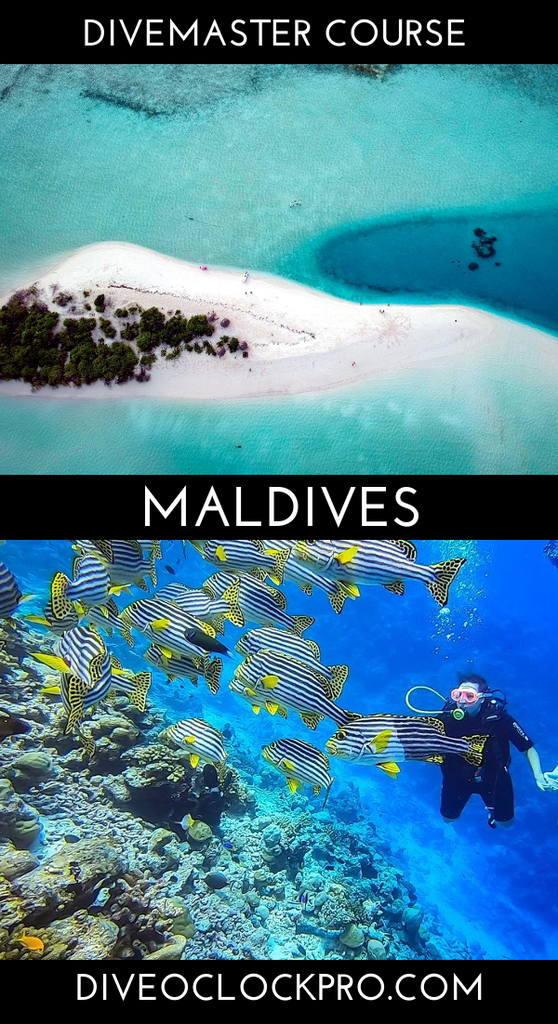SSI Divemaster Course Dive Master course  - Rasdhoo / Ukulhas  - Maldives