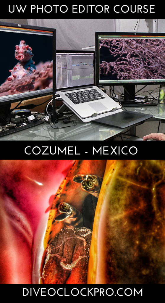 PADI *ONLINE* UW CINEMATOGRAPHY, PHOTOGRAPHY & FILM COURSES - Cozumel - Mexico