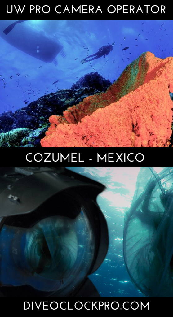 PADI THE UNDERWATER CAMERA OPERATOR COURSE - San Miguel de Cozumel - Mexico