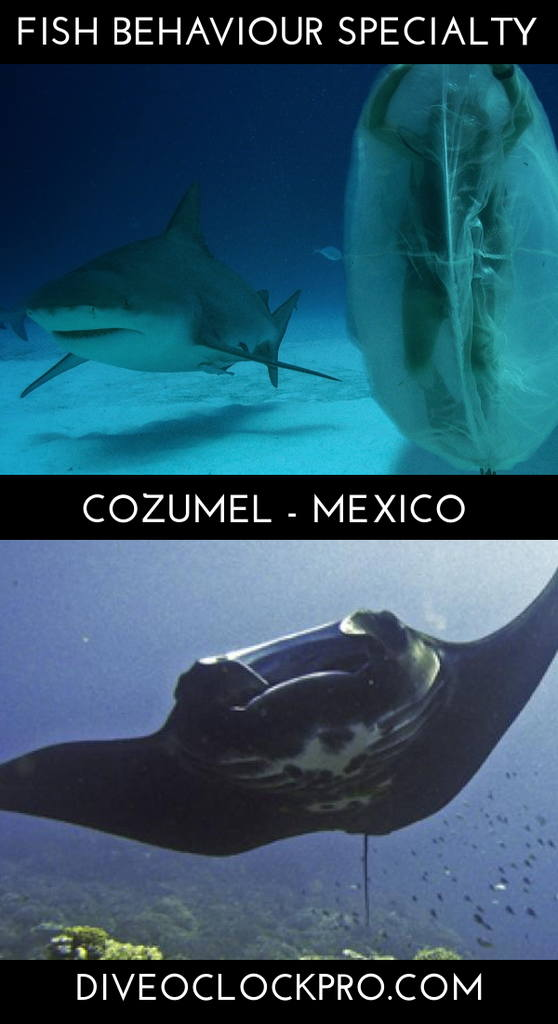 PADI THE FISH BEHAVIOUR SPECIALTY COURSE - San Miguel de Cozumel - Mexico