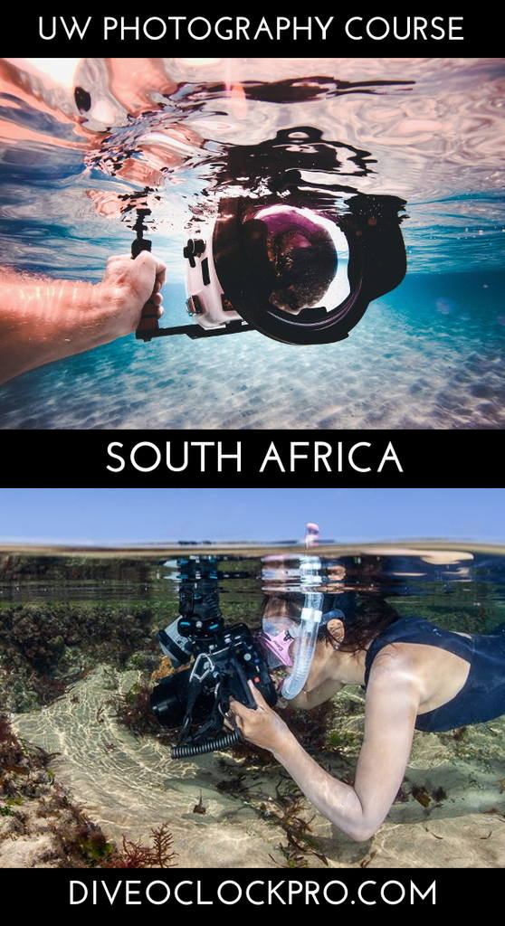 PADI Underwater Photography Program with accommodation - Scottburgh - South Africa