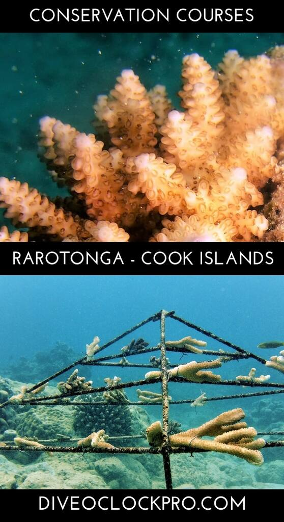 PADI Conservation Distinctive Specialty Courses - Rarotonga - Cook Islands