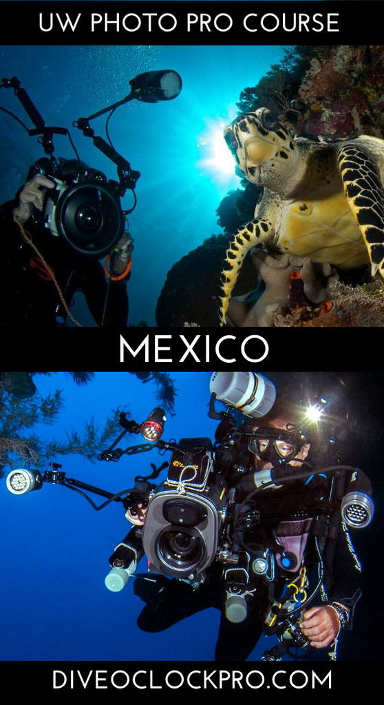 PADI *THE PROFESSIONAL UNDERWATER PHOTOGRAPHER* COURSE & CERTIFICATION - Cozumel - Mexico