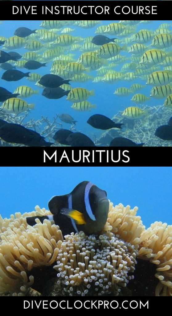 PADI Dive Instructor Course - Blue Bay, Mauritius