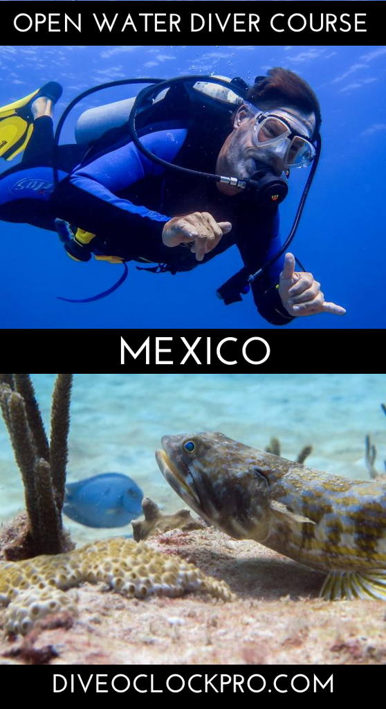 PADI Dive Course - Playa del Carmen, Mexico